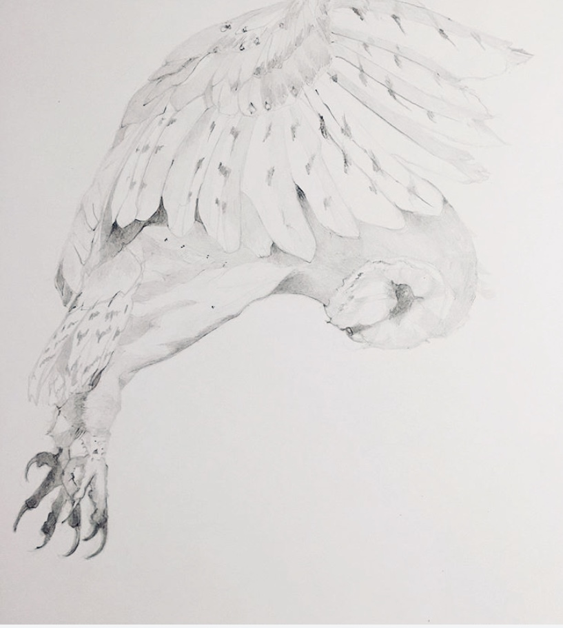 "Heather-Lancaster-Study-of-Barn-Owl_-24""x-16""-unframed_graphite-on-paper"